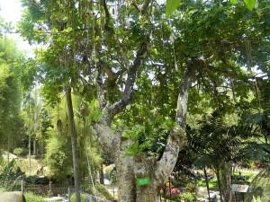 Tanaman Langka Taman Wisata Kyai Langgeng