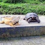 Koleksi Reptil Taman Satwa Kyai Langgeng