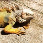 Satwa Reptil Taman Kyai Langgeng