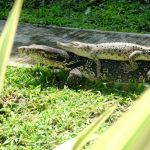 Reptil Taman Satwa Kyai Langgeng Kota Magelang